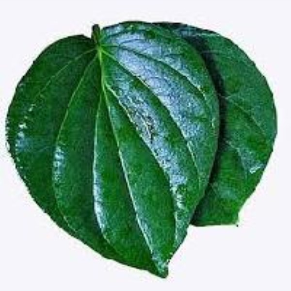 Betel Leaf or Paan Leaf